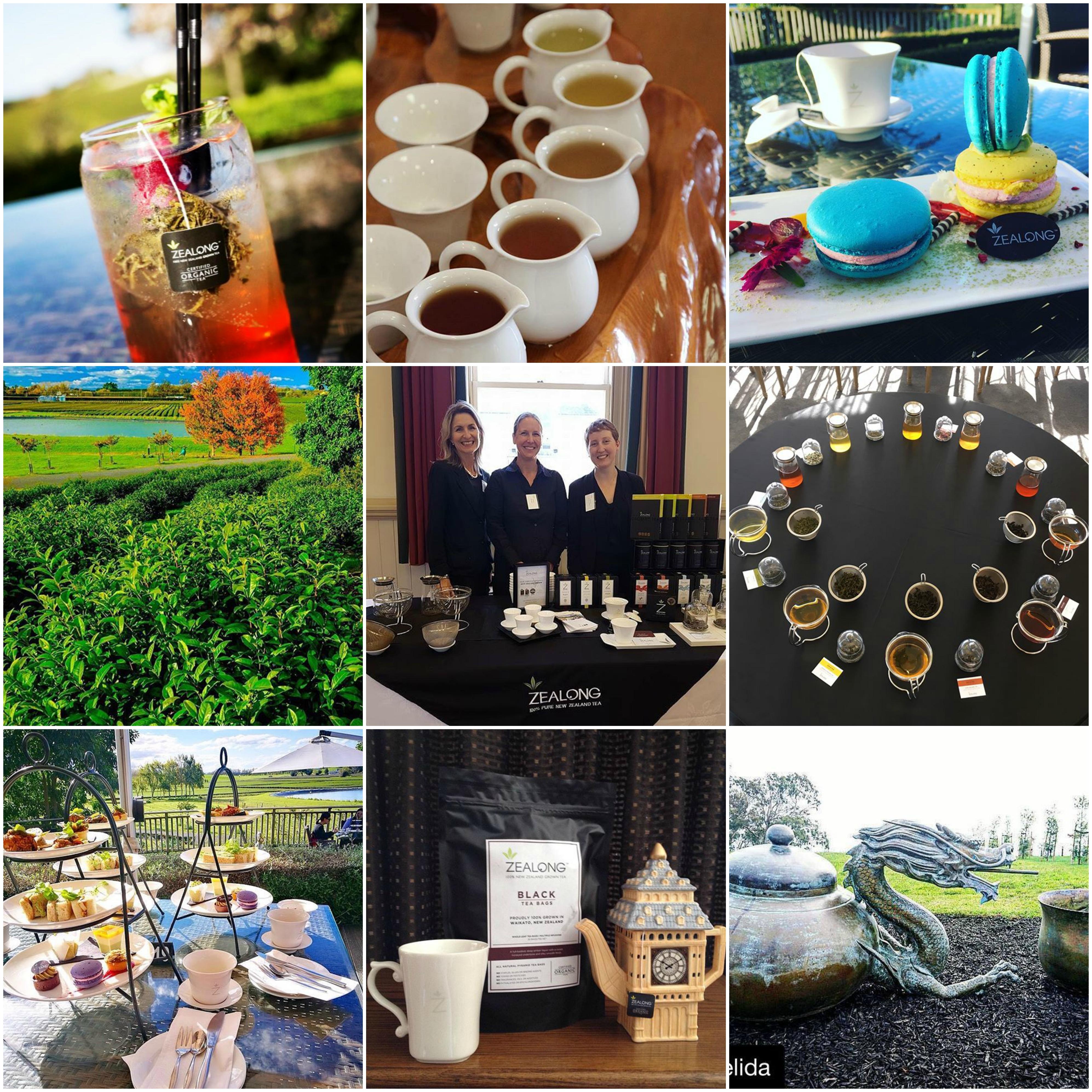 Zealong Tea Estate Tours | Platinum Transfers & Tours